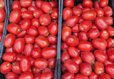 Karadeniz'den Rusya'ya yapılan meyve sebze ihracatı kazandırıyor