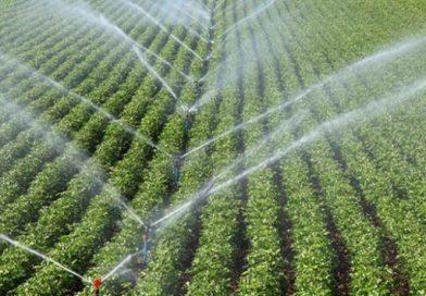 İzmirli çiftçi modern sulamayla 415 milyon lira gelir sağladı